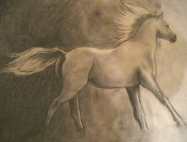 .:Horse:. by Sherry-Zellen