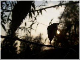 What became... by mirbiggles