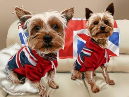 Union Jack Terriers by iamherecozidraw