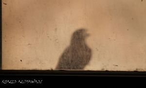 Dusty window with a Bird Shade - Bahrain by Khalid-AlThawadi