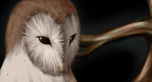 Barn Owl by ekoru