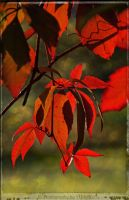 Autumn wine leaves ~ AStoKo by AStoKo
