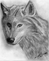 White Fang by Dances-With-Wolves