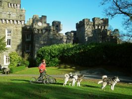 huskies at wray castle by harrietbaxter