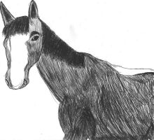 biro drawing of my horse mobey by phee-evans