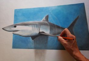 Mako shark 3D by AnthonyRojas