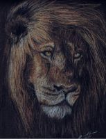 Lion by smile4thelie