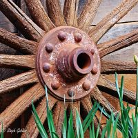 Wagonwheel by StephGabler