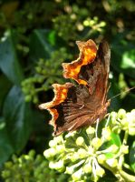 Comma 7 by iriscup