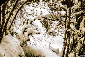 Snowy trees by Kissi94