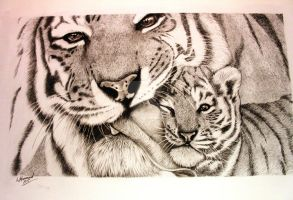 Tiger Kisses Finally finished by jintyandrayne