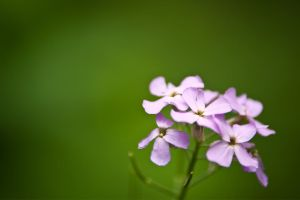 Little Flowers by AndersonPhotography