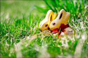 Golden Easter bunnies love 2 by 00Yarko