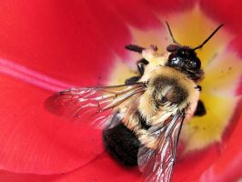 Lost Little Bumble Bee 2 by GeminiGirl83