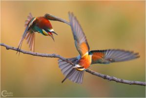 Bee Eaters Fighting by ClaudeG