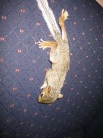 Baby Squirrel Photo 4 climbing by ydoc16