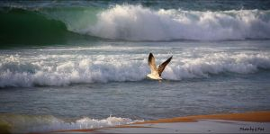 Flying in the wind by Patguli