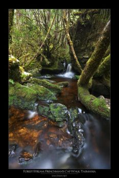 Forest Stream by eehan