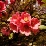 Spring flower by JustMe255