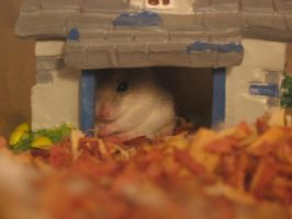 Hamster House by Manster21
