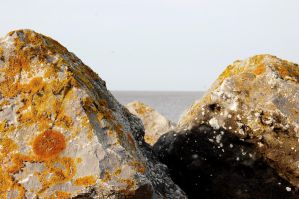 A rocky shore by panthera-lee