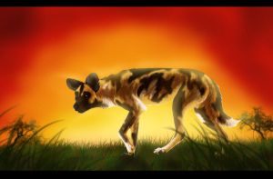 African Wild Dog by Silverrtiger
