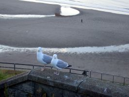locals whitby sea front by Sceptre63