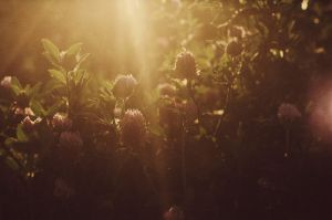 sunset on a clover field II by aimeelikestotakepics