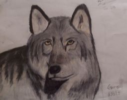 Grey Wolf 2 by wolfgrl1492
