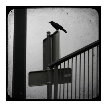 The crow by ISBN19712106