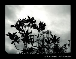 Black Flowers by dnogueira