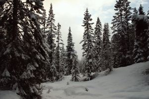 February forest 1 by Mirk-stock