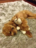 I Really Love My Toys by PoodleSchmoodle