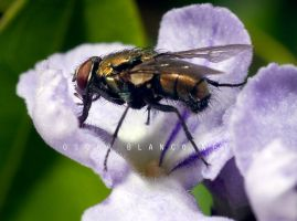 Fly pollinating flower 02 by otas32