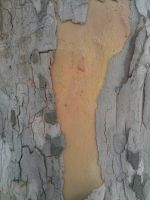 Wood texture6 by RedStyleOfficial