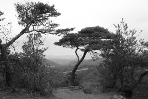 black and white tree on the edge by rayna23