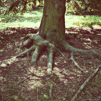 Root by Andaro