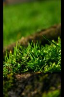 grass and moss by tweeny