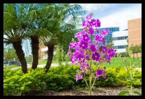 Flowers at UCF by ProneSniper
