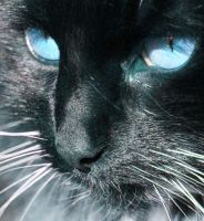 Icy Blue Eyes by olsons39