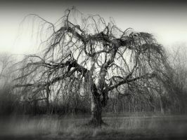 Dread tree by lostknightkg