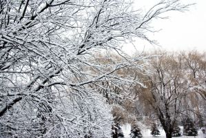 More Snowy Trees by directql