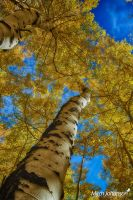 Following the Tree Trunk to the Sky HDR by mjohanson