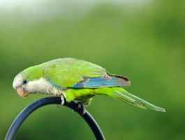 Green Parrot 16069279 by StockProject1
