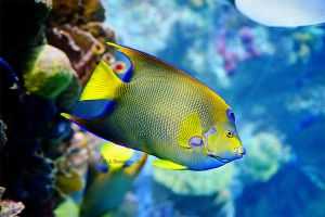 Yellow Tropical Fish by ashamandour