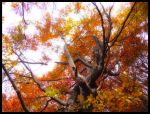 tree in red by Brzcu