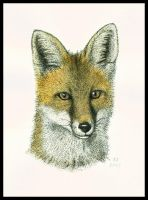 Fox Portrait by Skia
