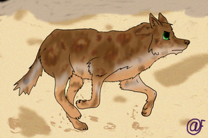 Wolf-dog running by Afna2ooo