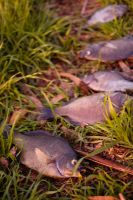 Fish on Grass by thevictor2225