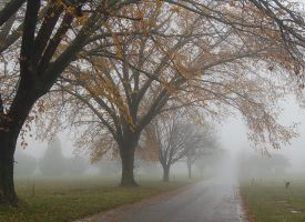 stock foggy cemetery 19 by stocklove